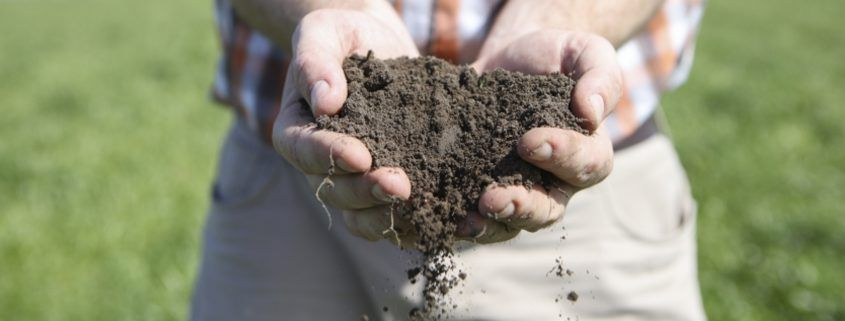Soil is a living ecosystem