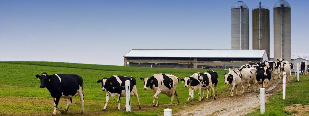 Farm carbon footprint, why does it matter?