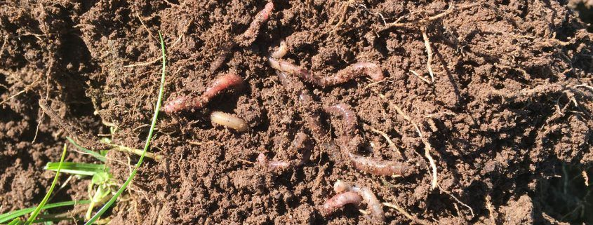 Feed your soil