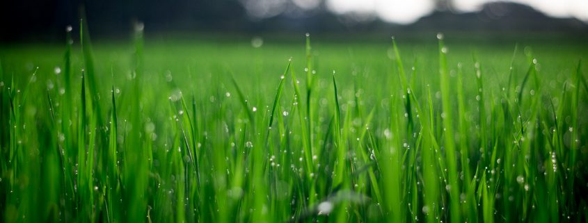 Effective nutrient cycling - grass