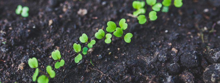 Biodiversity soil