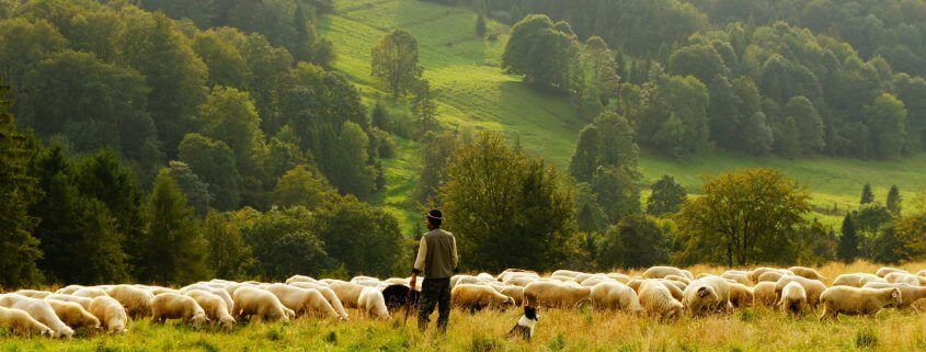 Sheep farmer