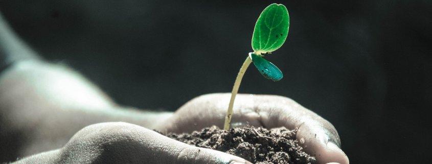 Hands plant soil