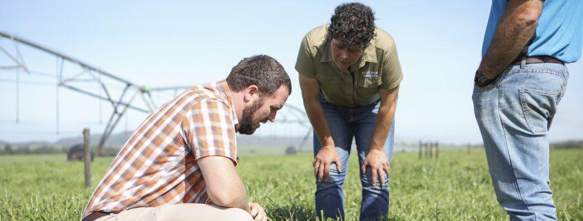 Examining pastures